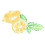 3種のレモンハーブ