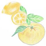 [季節限定]甘い柚子レモン