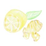 [冬限定]しょうがとレモン